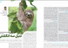 تنبل سه انگشتی؛ نقدی بر نظام آموزش عالی و حمایت از کالای ایرانی